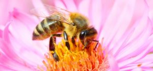 """Bee"" Aware for World Honey Bee Day"