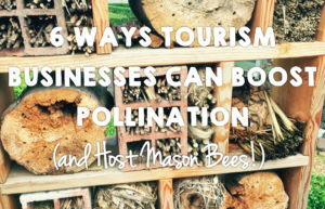 6 Ways Sustainable Tourism Businesses Can Boost Pollination (and Host Mason Bees!)