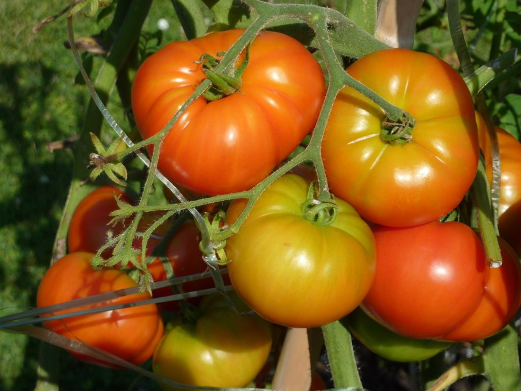 An onsite garden provides fresh produce for restaurant patrons (Photo credit: Pixabay)