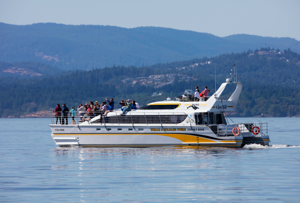 New Boat Eagle Wing Tours Green Tourism Gold