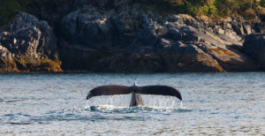 What you don't know about watching whales in Canada's Pacific Northwest