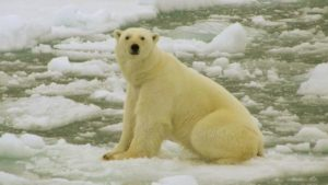 Feb 27 is International Polar Bear Day